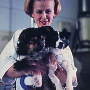 Manned Space Flight Art - Technician Holding Two Soviet Space Dogs by Ria Novosti