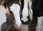 Foal Framed Prints - Tehya and Talia Framed Print by Terry Kirkland Cook