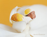 Anne Geddes Prints - Telayiah in Moth Orchid Print by Anne Geddes