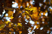 Telephoto Framed Prints - Telephoto fall colors Framed Print by Sven Brogren