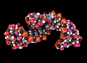 Telomerase Molecule, Artwork Print by Laguna Design