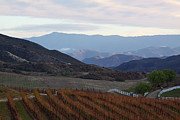 Wine Tasting Photos - Temecula vineyards by Viktor Savchenko