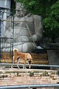 Abandoned Pets Photos - Temple Dog and Buddha by Nola Lee Kelsey