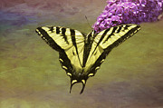 Tiger Swallowtail Posters - Temptation Poster by Diane Schuster