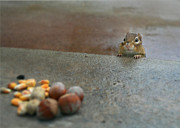 Chippy Photos - Temptation by Lori Deiter