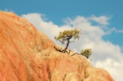 Rock Digital Art Originals - Tenacity Bonsai by Gus McCrea