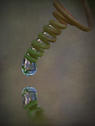 Passionfruit Metal Prints - Tendril Droplet  Metal Print by Kym Clarke