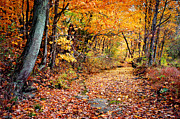 Tennessee Autumn Print by Cheryl Davis
