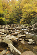Beautiful Creek Framed Prints - Tennessee Autumn Stream 6059 Framed Print by Michael Peychich