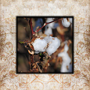 Patterned Photo Posters - Tennessee Cotton I Photo Square Poster by Jai Johnson