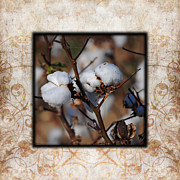 Cotton Field Posters - Tennessee Cotton II Photo Square Poster by Jai Johnson