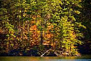 Red Mountains Prints - Tennessee Fall Trees Print by Paul Bartoszek