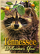Raccoons Framed Prints - Tennessee Racoon Framed Print by Vintage Poster Designs