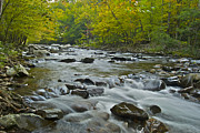 Tennessee Art - Tennessee Stream 6031 by Michael Peychich