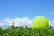 Daisy Framed Prints - Tennis Ball Framed Print by Andrew Dernie