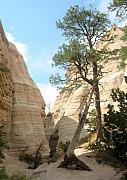 Halle Treanor - Tent rock Trees