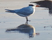 Snowy Night Photos - Tern by Jean Marshall