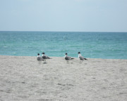 Florida Flowers Posters - Terns on the Beach Poster by Chris Andruskiewicz