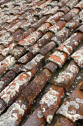 Terra Cotta Roof Tiles Print by Gaspar Avila