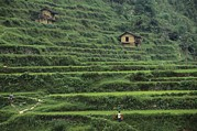 River Of Life Prints - Terraces For Agriculture Print by Raymond Gehman