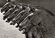 Warriors Photos - Terracotta Horses by Joe Bonita