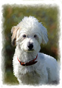 White Terrier Art - Terrier Dog Portrait by Michael Greenaway