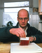 Bacteriology Prints - Testing For Bacteria Print by Volker Steger