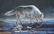 Wolf Pastels Posters - Testing the waters Poster by Deb LaFogg-Docherty