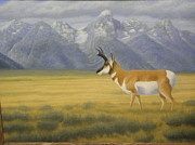 National Park Drawings - Teton Antelope by Alan Suliber