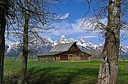 Old Trees Prints - Teton Barn Print by Douglas Barnett