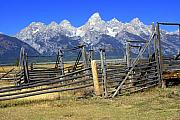 Marty Koch Prints - Teton Corral Print by Marty Koch