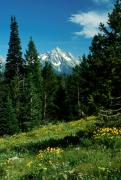 Snow-capped Peak Prints - Teton Meadow Print by Jerry McElroy