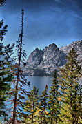 Green Foliage Drawings Prints - Tetons at Jenny Lake Print by Nena Trapp