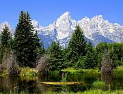 Tetons Print by Marty Koch