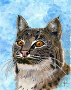 """bobcat "" Paintings - Texas Bobcat by Doug Hiser"