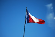 Texas Wildlife Print Art - Texas Flag by Sharen Duffing