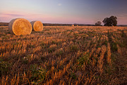 Hay Bales Framed Prints - Texas Hay Field 3 Framed Print by Paul Huchton