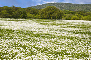Pictures Of Spring Posters - Texas Hill Country Spring 2 Poster by Paul Huchton