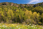 Texas Originals - Texas Hill Country Spring by Paul Huchton