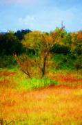 Digitally Enhanced Photographs - Texas Landscape 102310 by David Lane