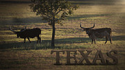 Long Horn Cow Photos - Texas Long Horn by Kelly Rader