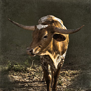 Texas Longhorn Cow Framed Prints - Texas Longhorn # 4 Framed Print by Betty LaRue