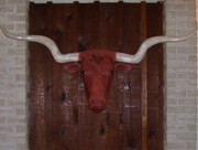 Handcrafted Reliefs - TEXAS Longhorn by Michael Pasko