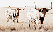 Texas Pair Print by Elizabeth Hart