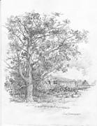 Jim Hubbard - Texas-Pecan Tree