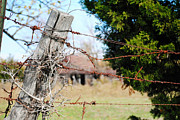 Barbed Wire Fences Photos - Texas Safety Net by Lisa Moore