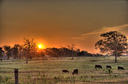 Barry Jones Metal Prints - Texas Sunrise Metal Print by Barry Jones