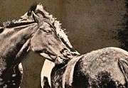 Textured Horse Art Framed Prints - Textured Horses Framed Print by Darren Burroughs