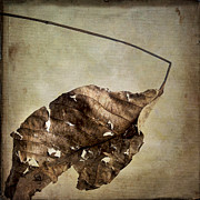 Wilted Posters - Textured leaf Poster by Bernard Jaubert