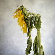 Textured Sunflower Print by Bernard Jaubert